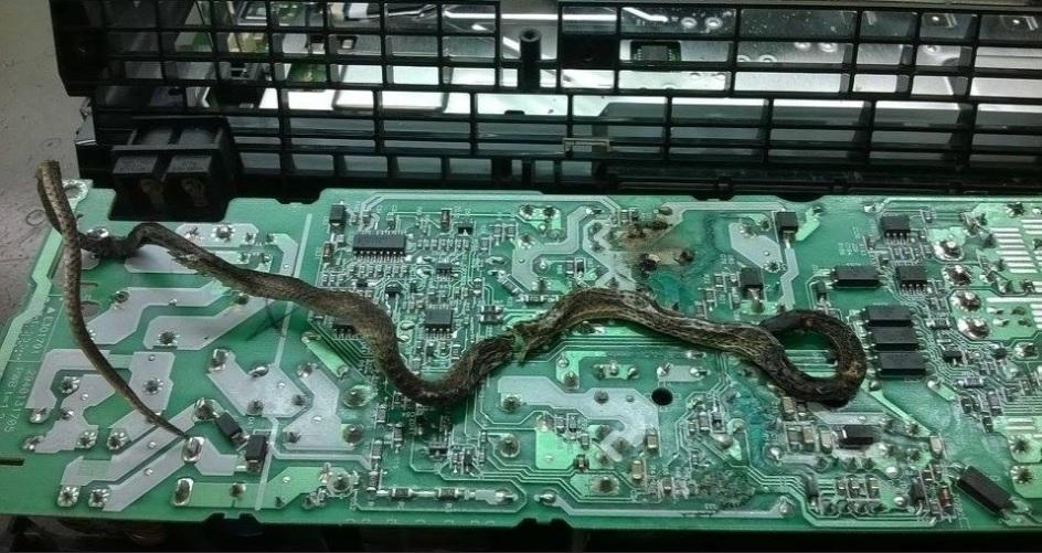 snake_ps4